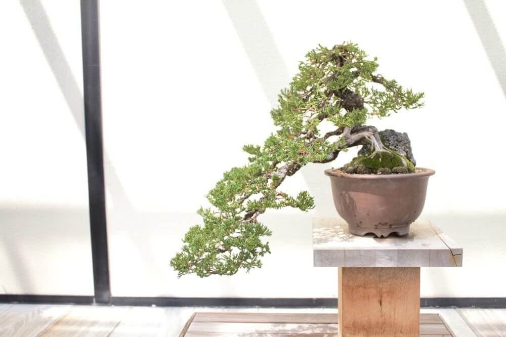 盆栽を大切に育てる10の習慣