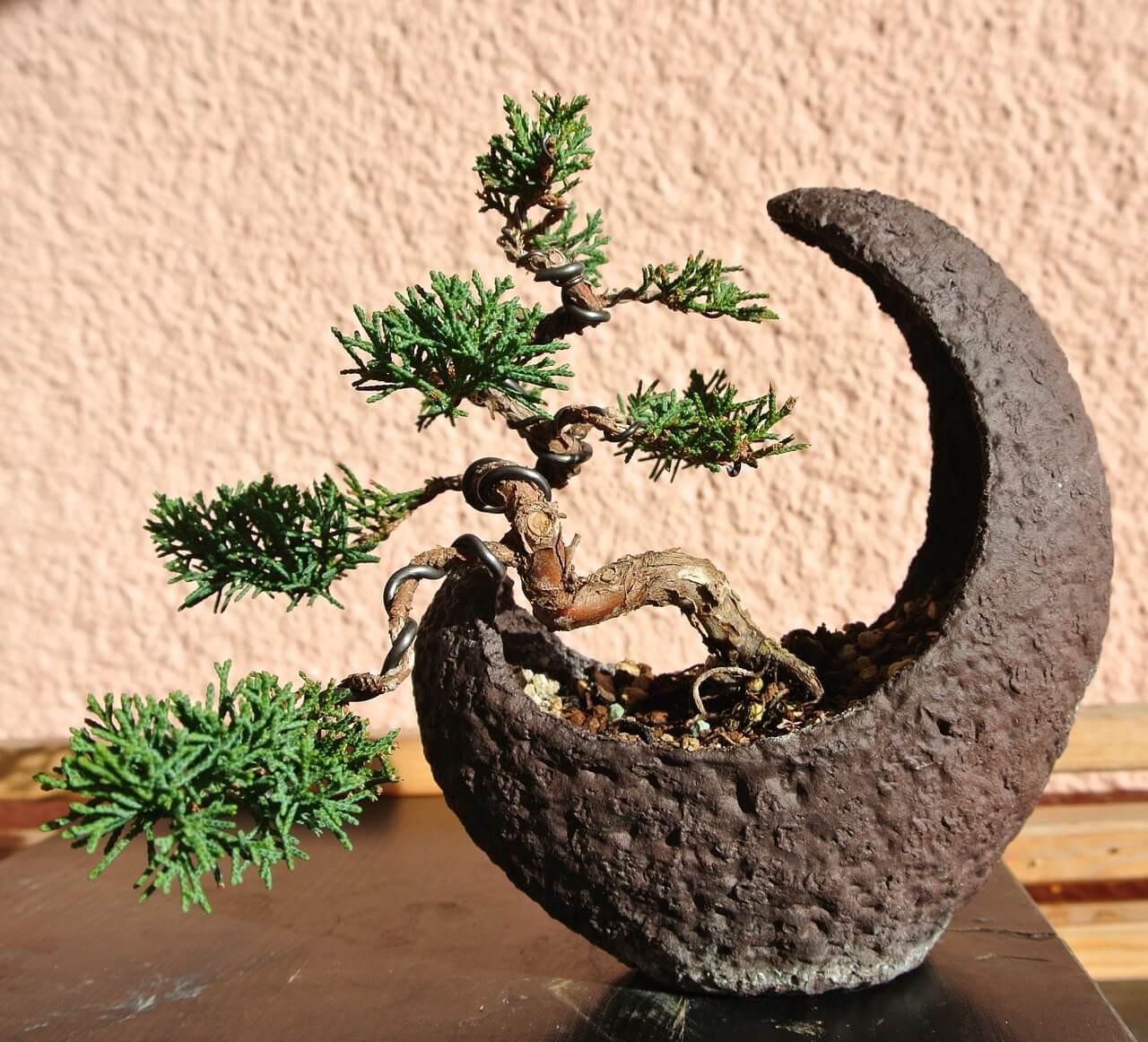 鉢の上の小宇宙?! 世界一高価な盆栽のご紹介