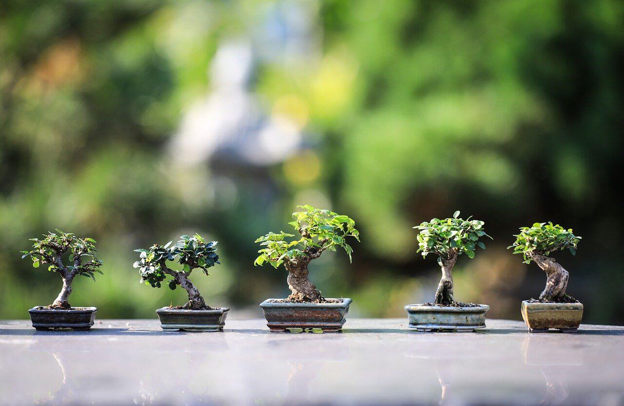 初めての盆栽の育て方 10のポイント