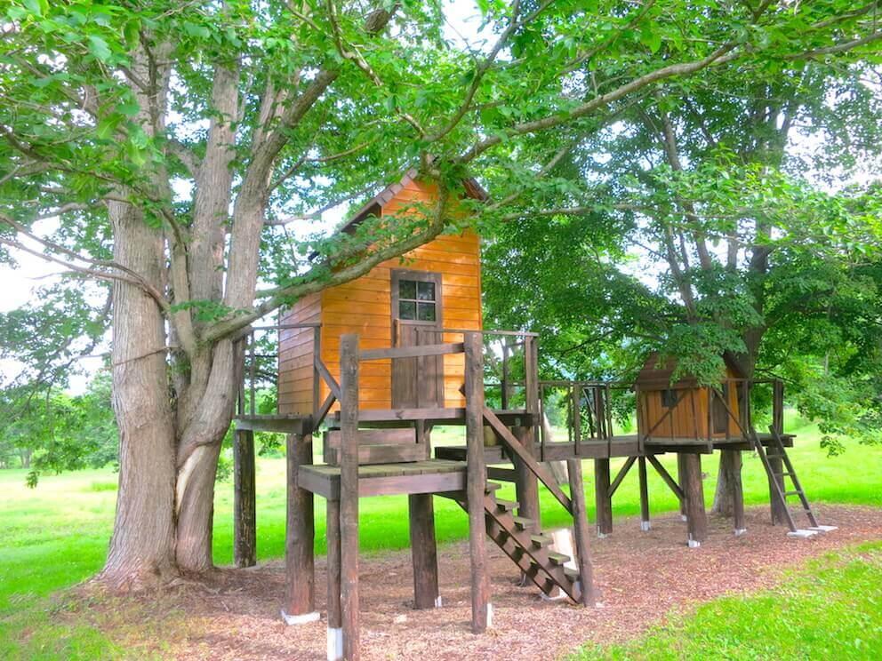 ツリーハウスの夢を現実に。見つけたい木の上の極上ハウス、秘密の隠れ家。
