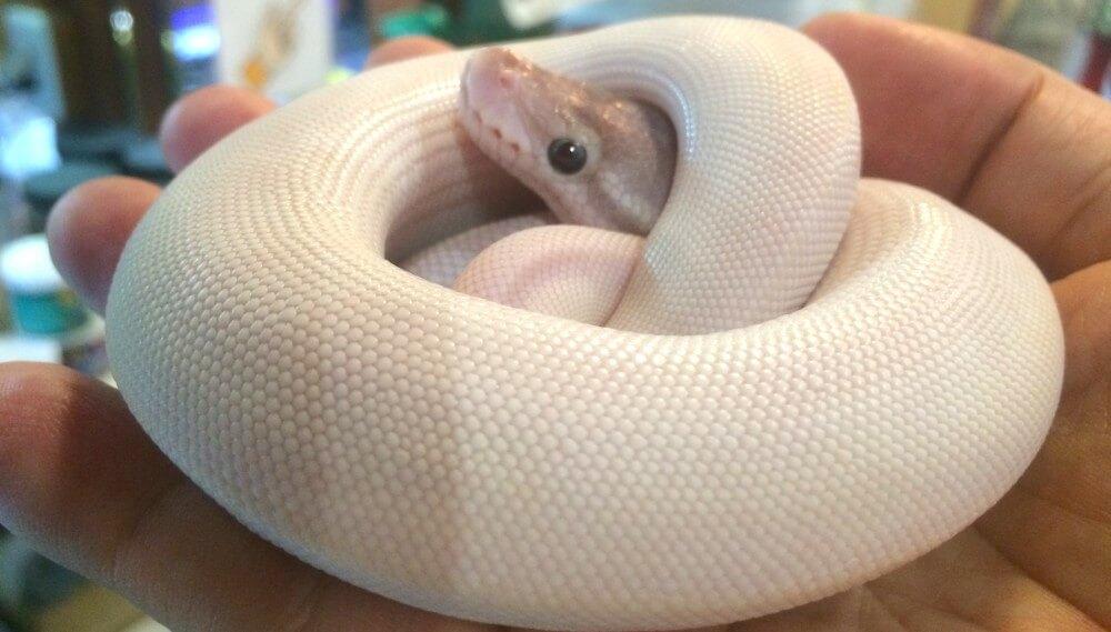 金運倍増!「神の使い」と言われるヘビのご利益をご紹介
