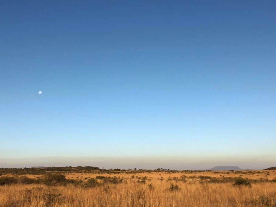 【ラグジュアリーな南アフリカの旅】野生動物のリアルライフに迫る大自然のサファリツアー
