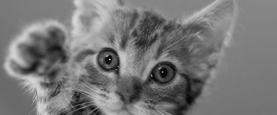 招き猫の由来とご利益を得るポイント9つ